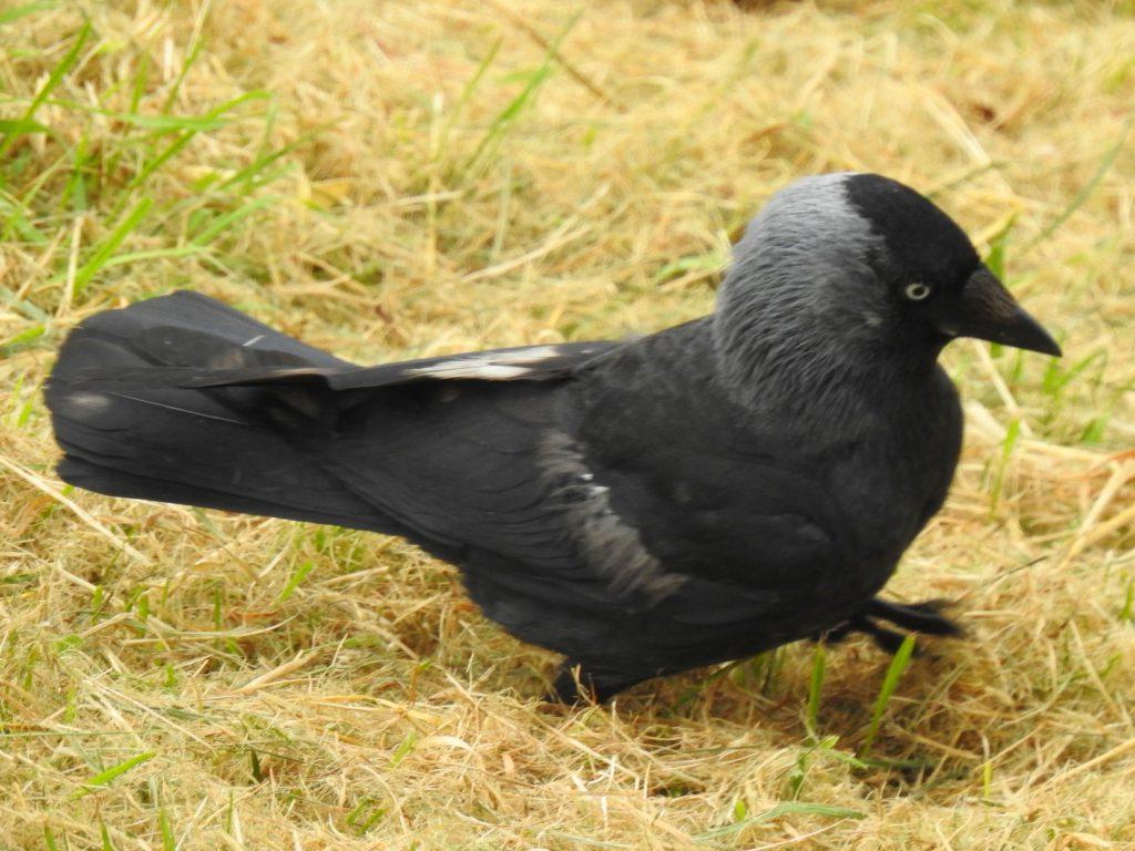United Kingdom Life List (35 Birds)