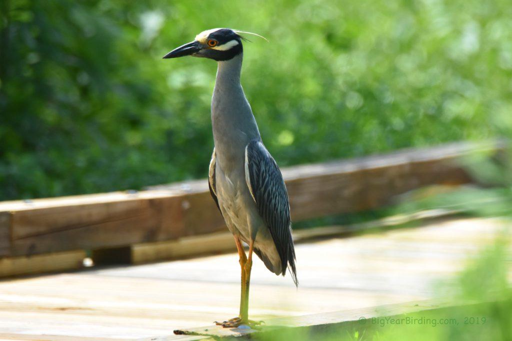 Weekly Bird Quiz 009